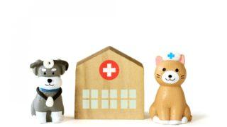 ペットの心の傷つきに・保護猫、保護犬を迎えるのなら、このエッセンス