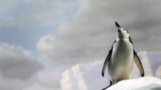 【閲覧注意】ちょっと脱線・ファーストペンギンの真実