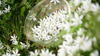 【募集開始】Bach Flower Remedy Lesson 第3期
